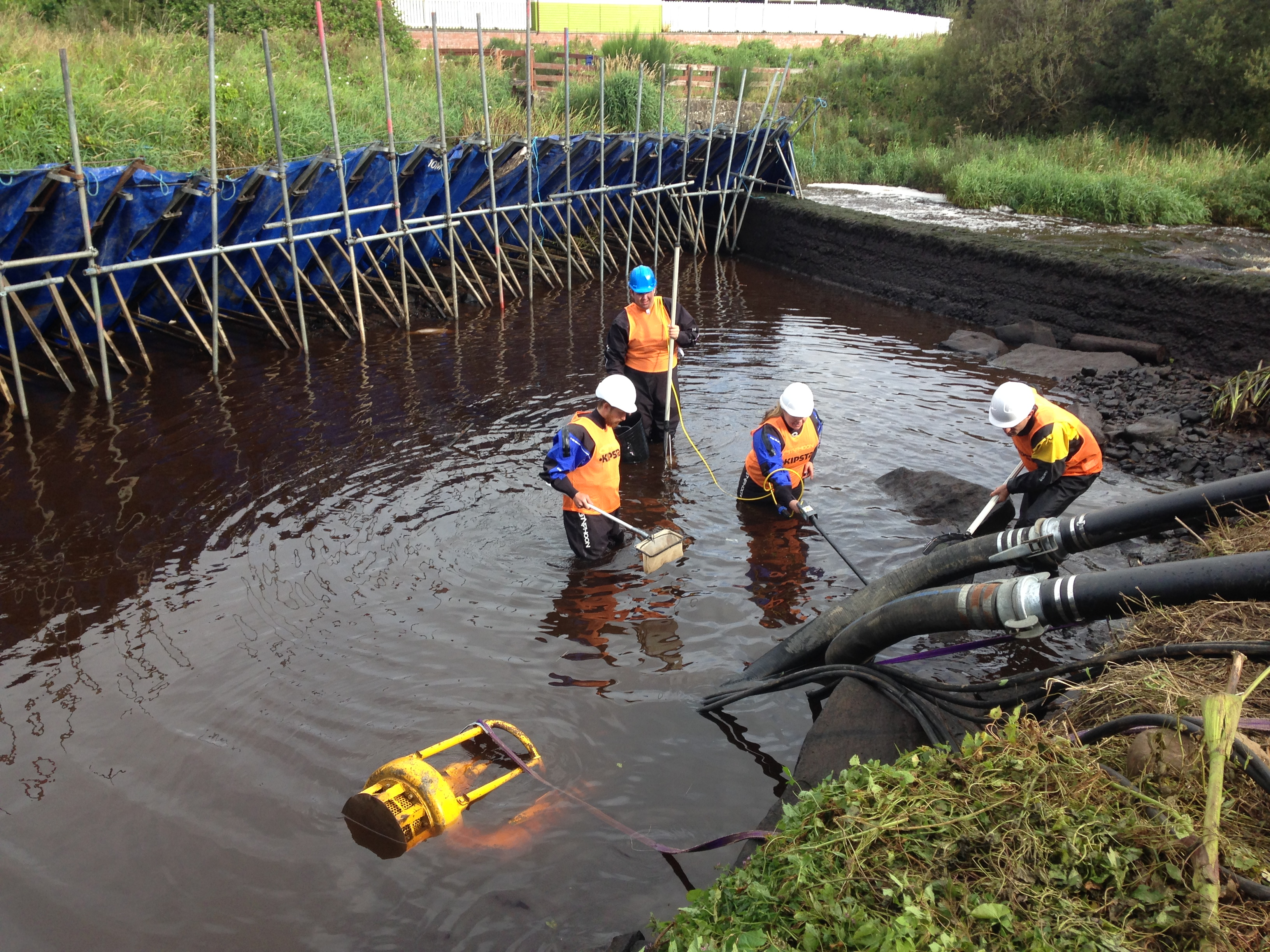 Rescuing fish behind a plastic dam at Kirkton