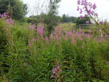 Riot of invertebrates in a road verge