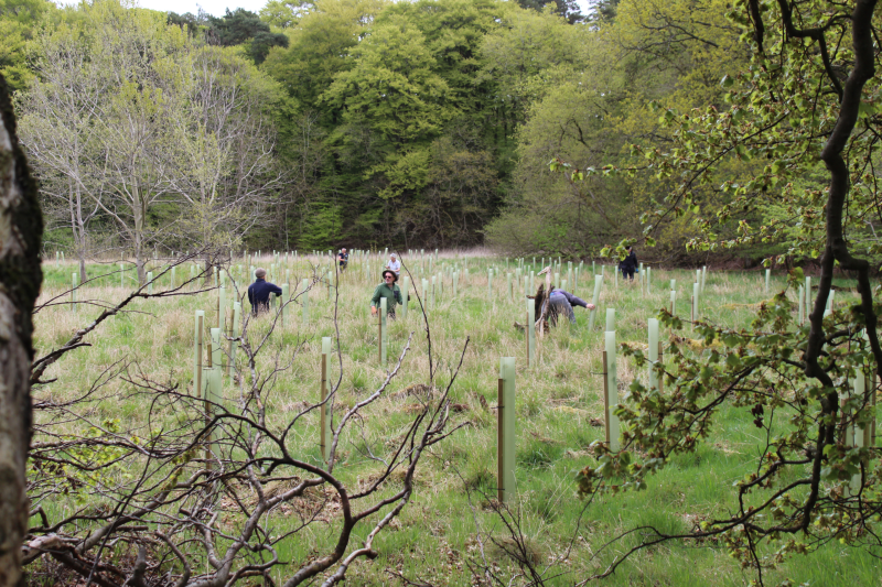volunteers in the grass as they clear the grass from around young trees