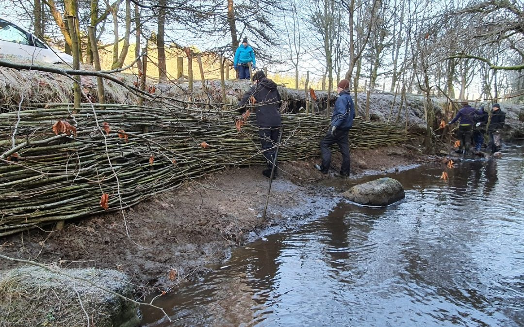 Willow Spiling with Friends of Polkemmet Country Park